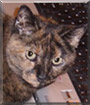 Madison the Tortoiseshell Cat