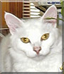 Shilgi the Domestic Streetcat