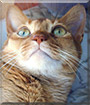 Rusty the Abyssinian