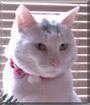 Gorbichoff the Shorthair Cat
