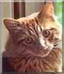 Rowdy the Longhair Cat