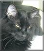 Dimitri the Mediumhair Cat