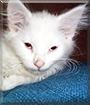 Casper the Domestic Longhair