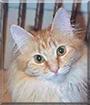 Su-Nita the Maine Coon Cat