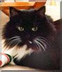 Sylvester the Persian