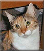 Kalista the Tabby/Calico mix
