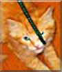 Ukulele the Orange Tabby