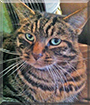 Ripley the Tabby, the Cat of the Day