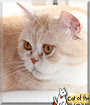 Jolie the Cat