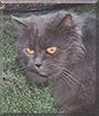 Jasper the Persian
