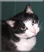 Boots the Tuxedo Cat