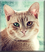 Emil the Tabby mix, the Cat of the Day