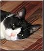 Sam the Tuxedo Cat