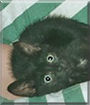 Rover the Domestic Cat