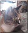 Charlotte the Calico, the Cat of the Day