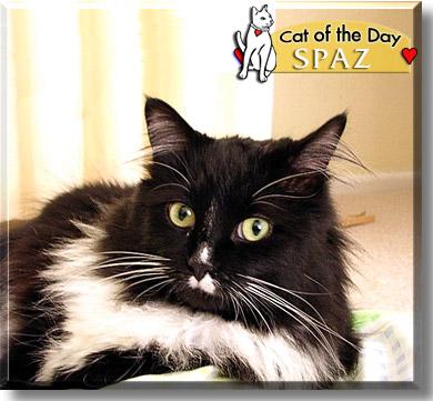 Spaz Tuxedo Cat January 8 2005