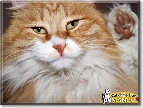 meow like a cat