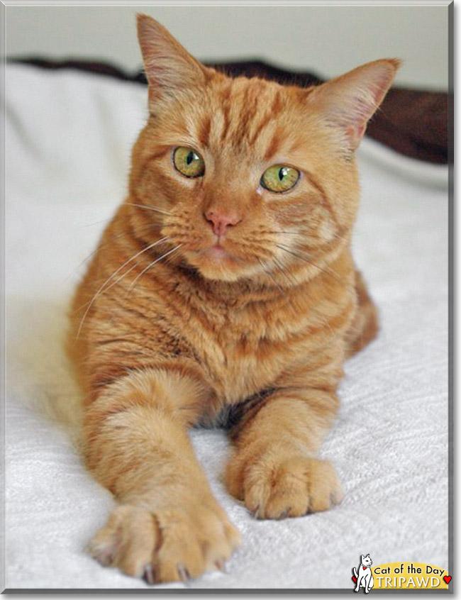 scag tiger cat belt diagram