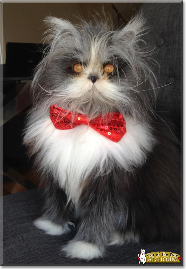great cat video