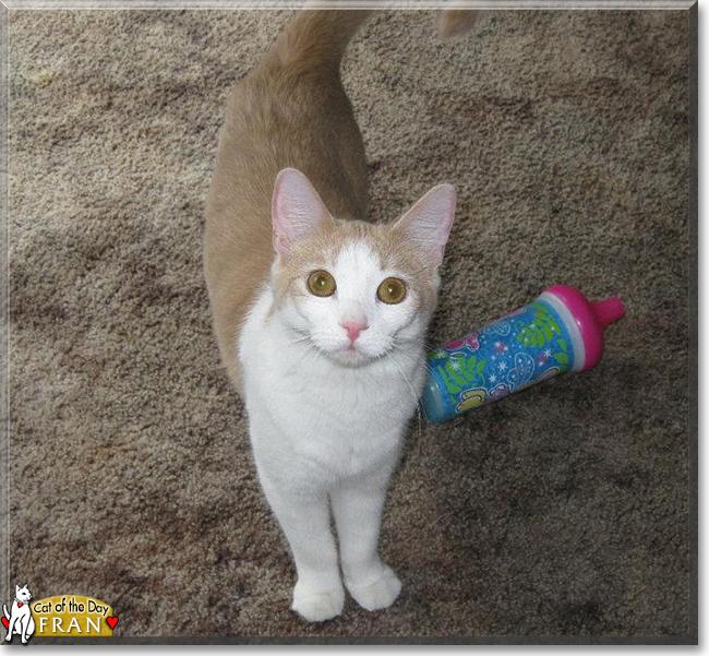 Catnip Cat Gets Paranoid