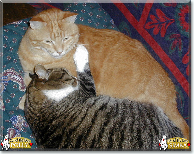 Simba, Polly the Tabby Cats, the Cats of the Day